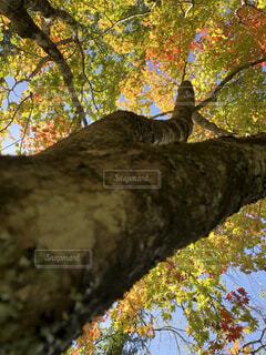 近くの木のアップの写真・画像素材[1736148]