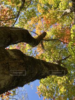 近くの木のアップの写真・画像素材[1736151]