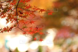 近くの木のアップの写真・画像素材[1736313]
