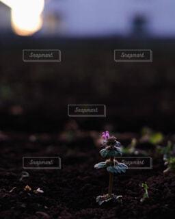 花の写真・画像素材[1775382]