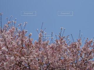 もっと空への写真・画像素材[1863806]