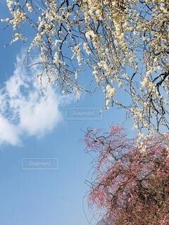 少し早い春の訪れの写真・画像素材[4180450]