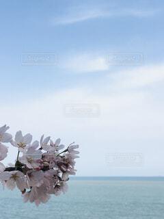 春の写真・画像素材[4288756]