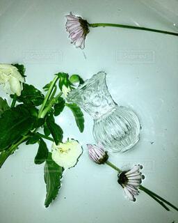 浮かぶ花の写真・画像素材[1737514]