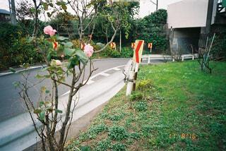 フェンスの写真・画像素材[1743657]