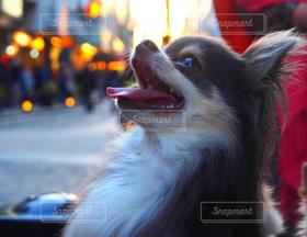 犬,笑顔,dog,イヌ,犬が好き