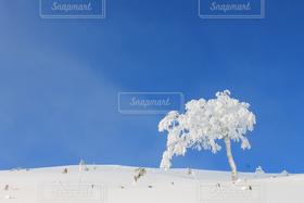 冬,木,雪,白,青空,青,北海道,雪化粧,トマム
