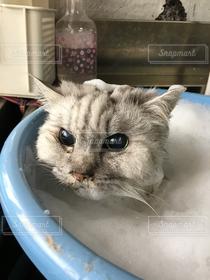 バケツ,猫三昧,泡風呂