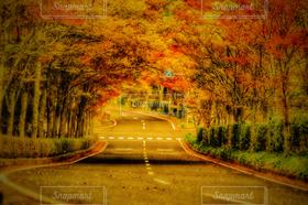 秋,道路,街路樹