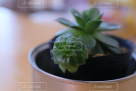 自然,インテリア,植物,植木鉢,観葉植物,多肉植物,札幌市,横写真,インテリア小物