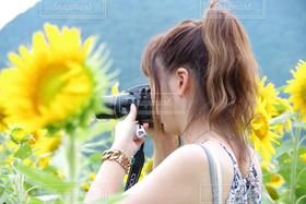 女性,自然,カメラ女子,ひまわり