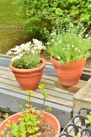 自然,花,春,植物,ガーデニング,植木鉢