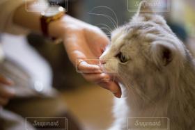 猫,猫が好き,かわいい,ねこ,ぬこ,ねこ部