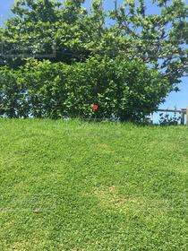 自然,風景,公園,花,夏,ハイビスカス