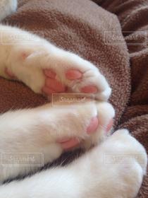 猫,肉球,白猫,猫カフェ