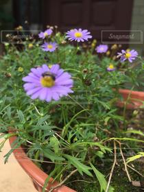 自然,風景,公園,花,紫,植木鉢