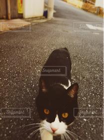 猫,道路,ねこ,黒猫,ネコ