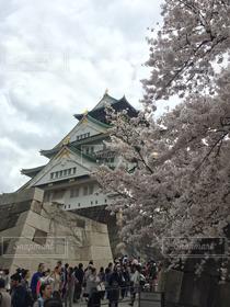 風景,公園,春,桜,曇り,城,大阪城,天守閣,大阪城公園,さくら,ゆか写