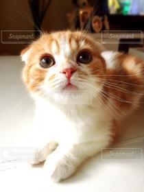 猫,子猫,仔猫