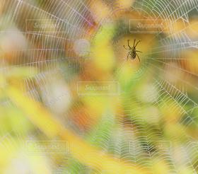 自然,秋,紅葉,黄色,季節,蜘蛛の巣,背景,クモの巣,ハロウィン,昆虫,蜘蛛,オレンジ色,壁紙,ハロウィーン,色鮮やか