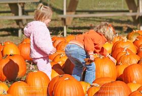 子ども,2人,風景,秋,屋外,人,ハロウィン,かぼちゃ,パンプキン,畑,オレンジ色,ハロウィーン