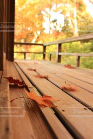 自然,秋,紅葉,庭,京都,季節,落ち葉,日本,瑠璃光院