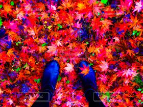 女性,1人,ファッション,自然,アウトドア,秋,自撮り,紅葉,赤,足元,足,ブーツ,おしゃれ,モミジ