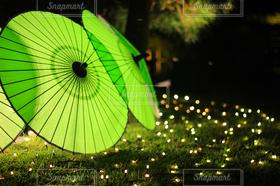 風景,傘,ライトアップ,日本,和傘,伝統