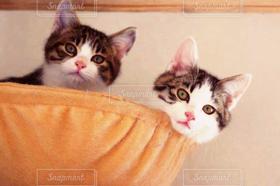 猫,くつろぐ,まったり,仲良しな二人