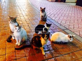 猫,自然,風景,にゃんこ,猫が好き,ねこ,ぬこ,沖縄県,ネコ,沖縄市