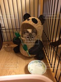 猫,猫が好き,パンダ