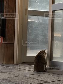 猫,動物,屋外,ねこ,外