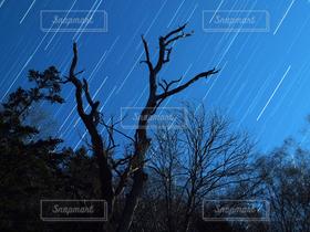 自然,風景,空,冬,夜,森林,夜空,木,森,星空,青,星,宇宙