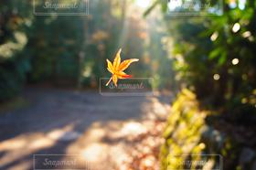 自然,風景,秋,紅葉,葉