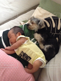 犬,赤ちゃん,仲良しな二人