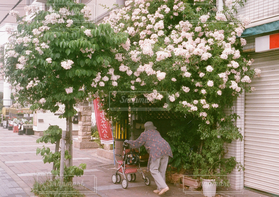 女性,1人,40代以上,風景,建物,花,シニア,木,緑,植物,後ろ姿,歩く,お年寄り,おばあちゃん