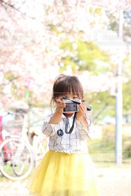 子ども,1人,公園,春,カメラ,桜,カメラ女子,ピンク,子供,女の子,幼児,真剣,逆,逆向き
