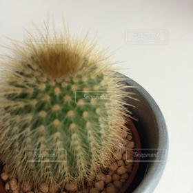 自然,緑,植木鉢,サボテン,痛い,針