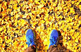 秋,足元,足,銀杏,Autumn