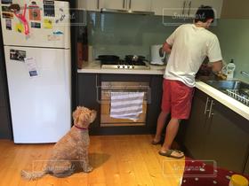 犬,キッチン,料理,オーストラリア,airbnb