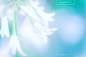 自然,花,お花畑,白,きれい,白い花,美
