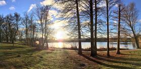 自然,公園,木,太陽,林,光,木陰,ひだまり,日,鯉