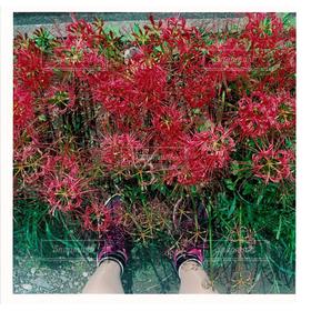 女性,1人,20代,自然,風景,花,秋,自撮り,足元,足,彼岸花,疎水