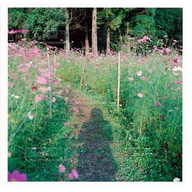 女性,1人,20代,自然,風景,アウトドア,公園,花,秋,自撮り,コスモス,影,秋桜