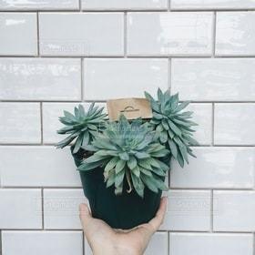 植木鉢,観葉植物,多肉植物