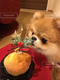 犬,食べ物,スイーツ,冬,ケーキ,ポメラニアン,クリスマス