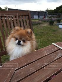 犬,冬,ポメラニアン,テラス席,明石海峡公園