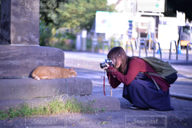 女性,1人,20代,猫,動物,カメラ女子,撮影