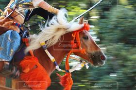 馬,疾走,日本,スピード,流鏑馬