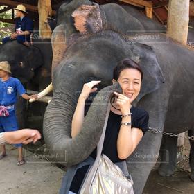 女性,1人,キス,人物,笑顔,ゾウ,象,Kiss,タイ,チェンマイ